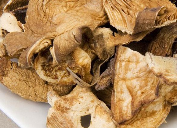 Hongos Pleurotus Oyster (Girgolas)