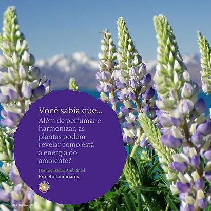 Plantas purificam e harmonizam os ambien