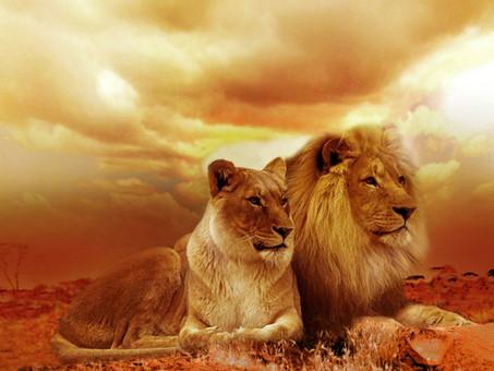 Signo de Leão, o Majestoso