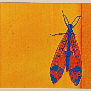 Hidden Moth Carolyn Gibson $50.00