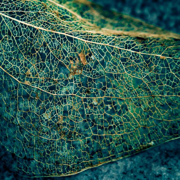 Leaf Cassondra Johnson NFS