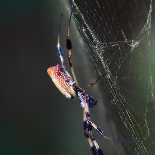 Garden Spider Bruce Garner $30.00