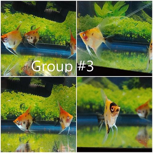 GROUP #3 - Facebook November Bundle