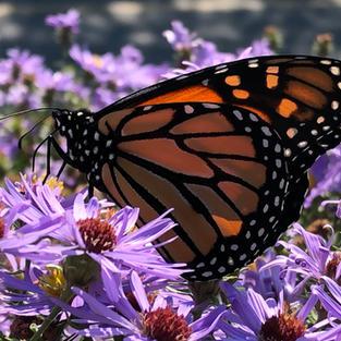 Pollinator support