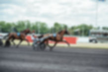 Harness Racing, Standardbred, Horses, Stallions, Horse Racing, Yearling Preparation, Standardbred, Horse Training, Trent Yesberg, Sarah Clements