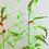 Thumbnail: Jae Hi Ahn - My Little Conservatory