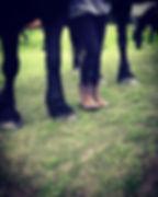 Horses, Horses, More Horses! ._._._._.jp