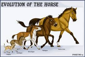 My Horse My Partner