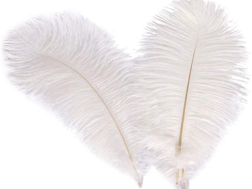 Natural Feathers - 012