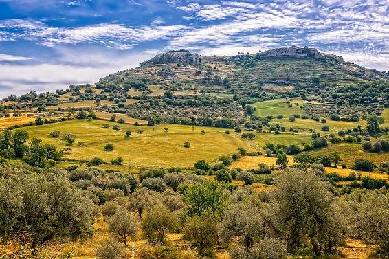 Vins de Sicile