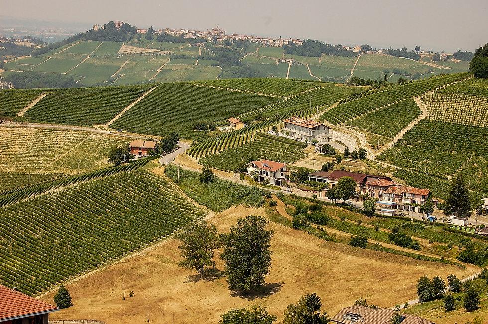 Vins du Piemont