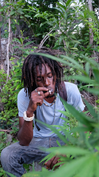 Young Marijuana Farmer in Jamaica