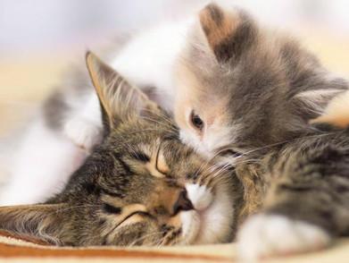 خدمات متابعة الحمل للحيوانات الاليفة في عيادة بيت الدواء