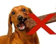 6 أسباب تخليك متأكلش كلبك حلويات
