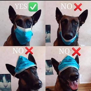 Dog Covid Mask .jpg
