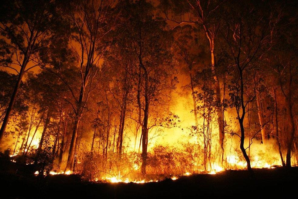 incendio-florestal-48032821.jpg