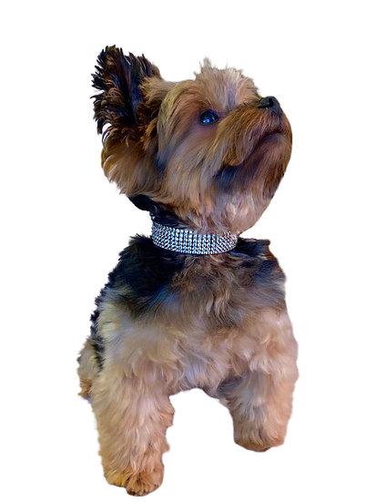 Small Diamond Dog Collar