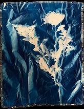 EmilieSchroeder_Cyanotype_Floral Test 1.