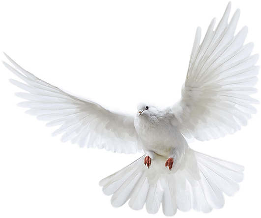 dove2.png