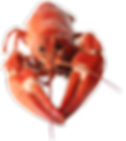 lobster-rolls-deerfield-beach.png