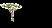 acacia wealth management kansas city.png