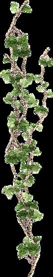 pngkey.com-flower-vine-png-995572.png