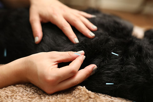 Photograph of acupuncture.
