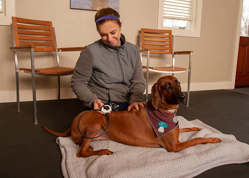 Photograph of pulsed electromagnetic field therapy (PEMF).