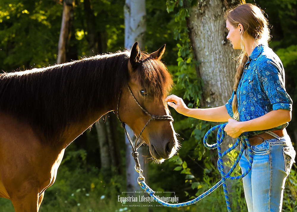 Feral horse during training session touches human hand by nose