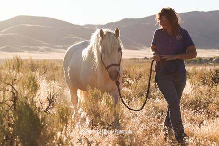 Highland Stallion during sunset