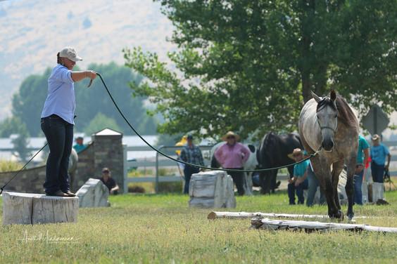 Natural Horsemanship class