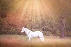 Unicorn in pasture