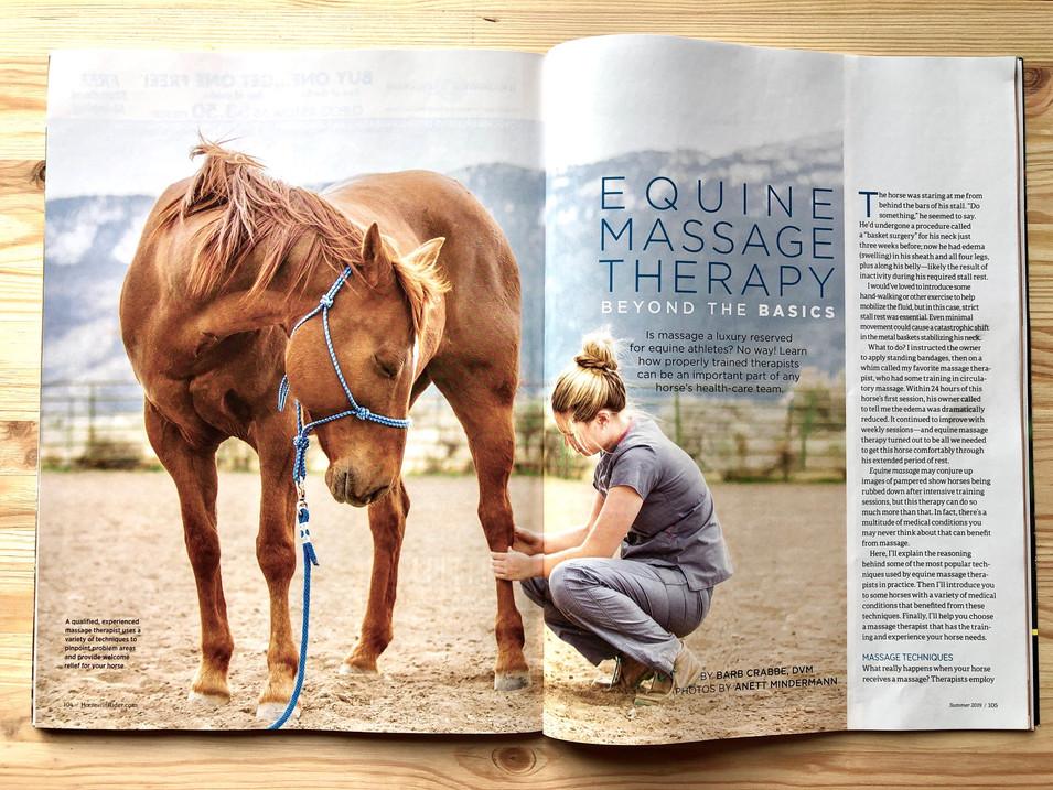 Equine Massage Therapist in Horse and Ri