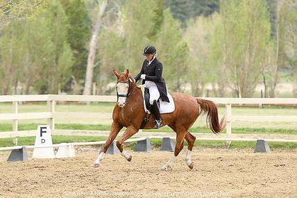 Dressage Rider riding a Grad Prix test