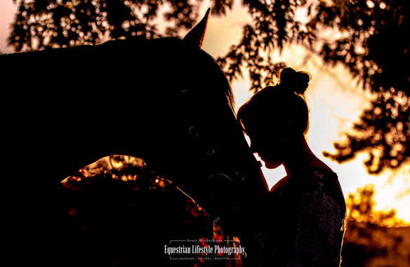 Silhouette of horse and rider