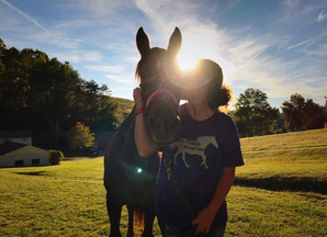 3 Easy Ways Of How YOU Can Help Your Local Horse Rescue Or a Charity Of Your Choice!