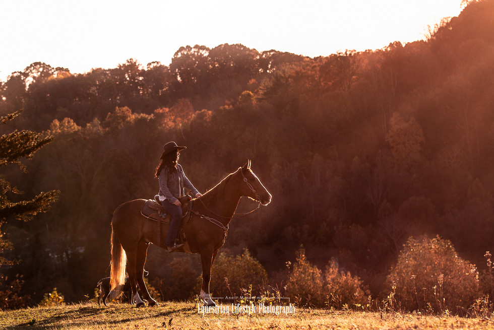 Equine Sunset Portrait of Horse and Rider