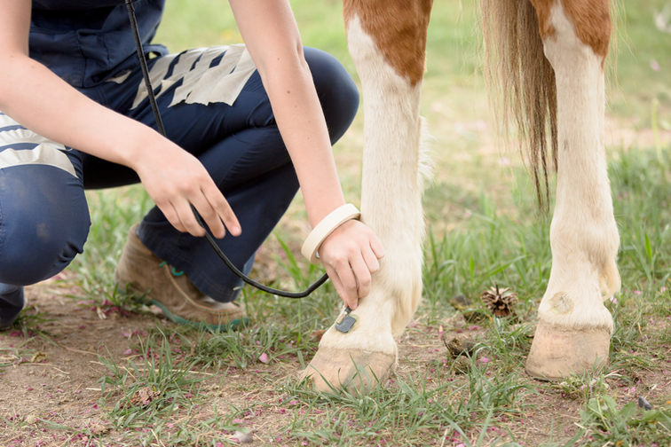 Equine Photography_ Personal Branding wi