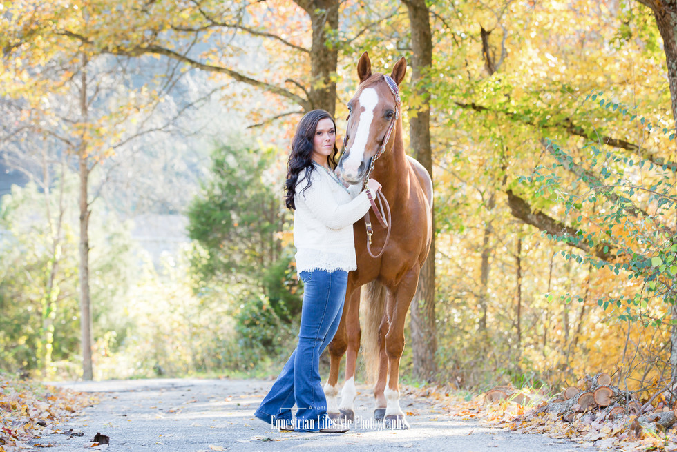 Equine Portrait of Horse and Rider