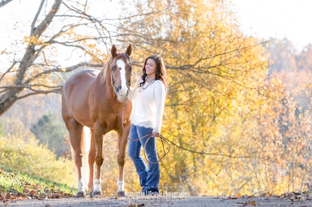 Equine Portrait with Horse and Rider