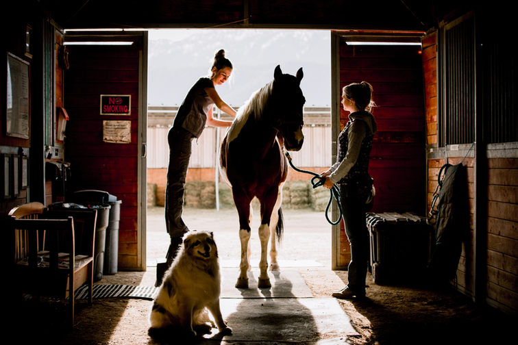 Equine Massage Therapist with horse
