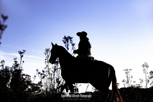 Equine Sunset Silhouette Photography