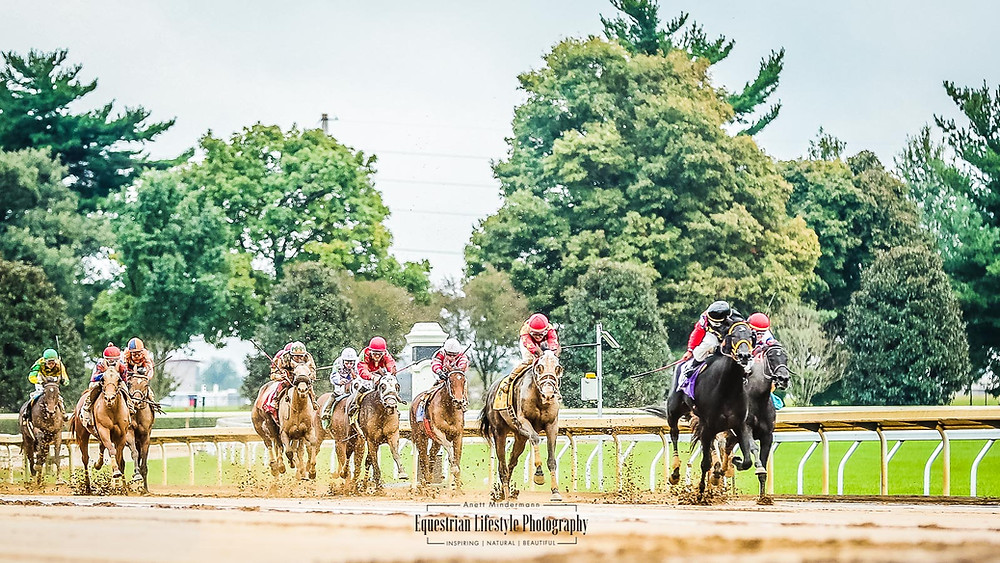 Horses racing towards the finish line on a muddy track