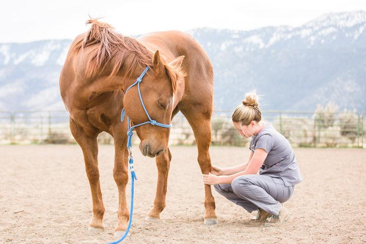 Equine Massage Therapist Branding Image