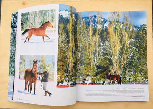 two page spread of my equine photography