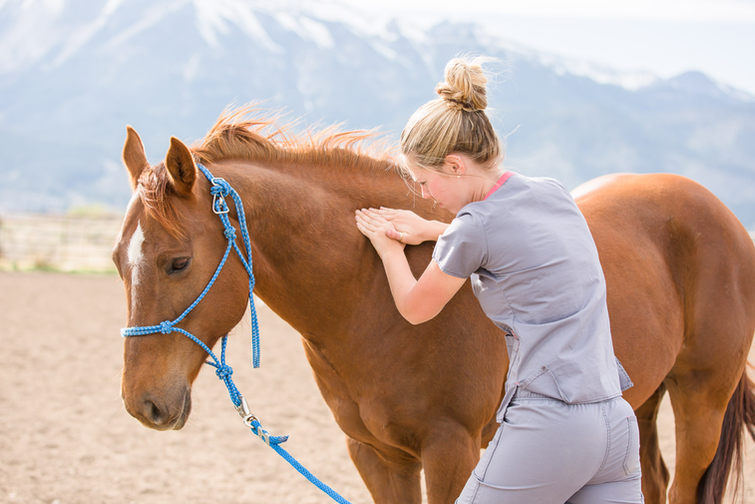 Equine Massage Therapy Session