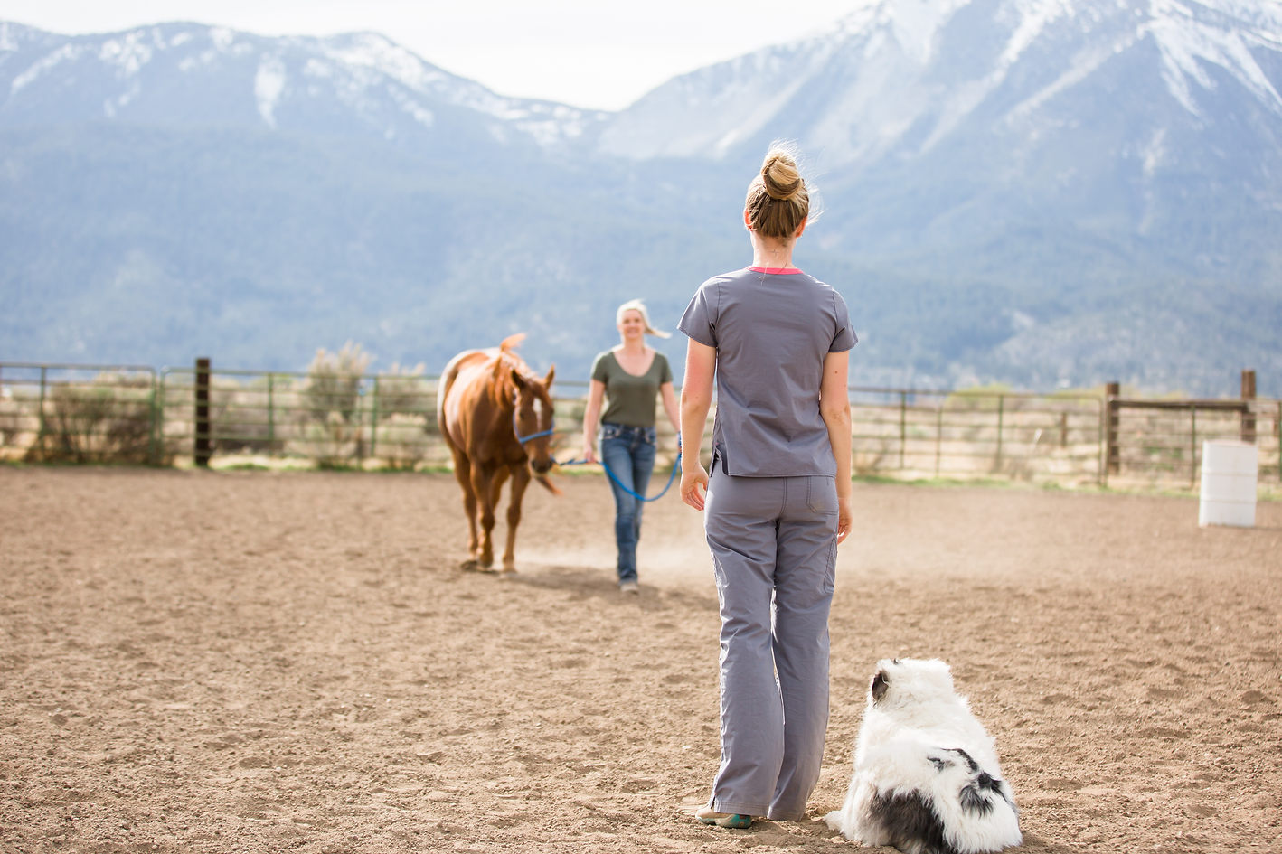 Equine Massage Therapist with client