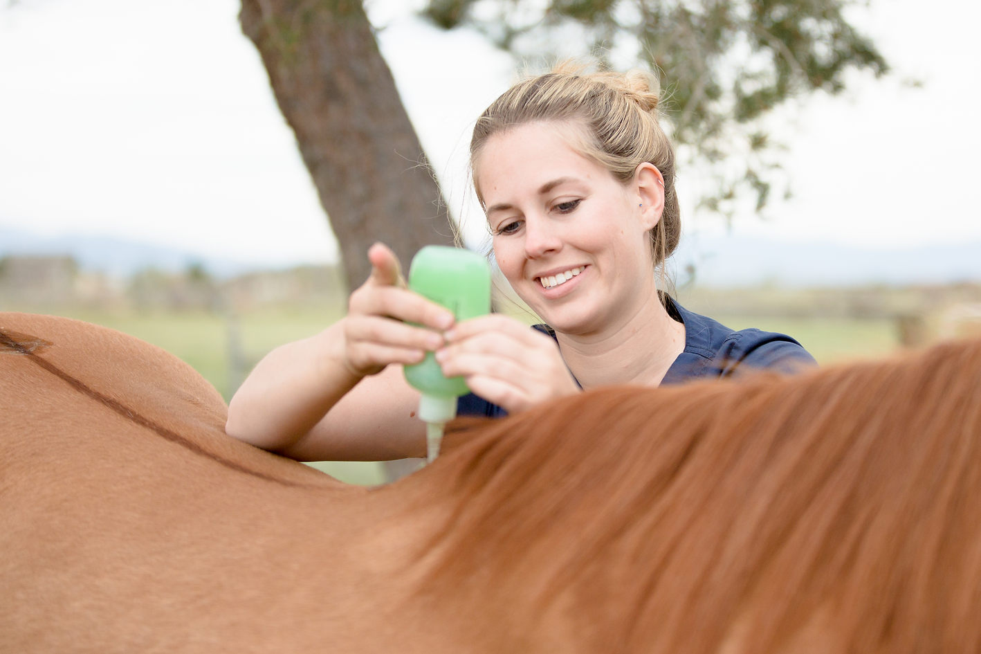 Equine Personal Branding Session