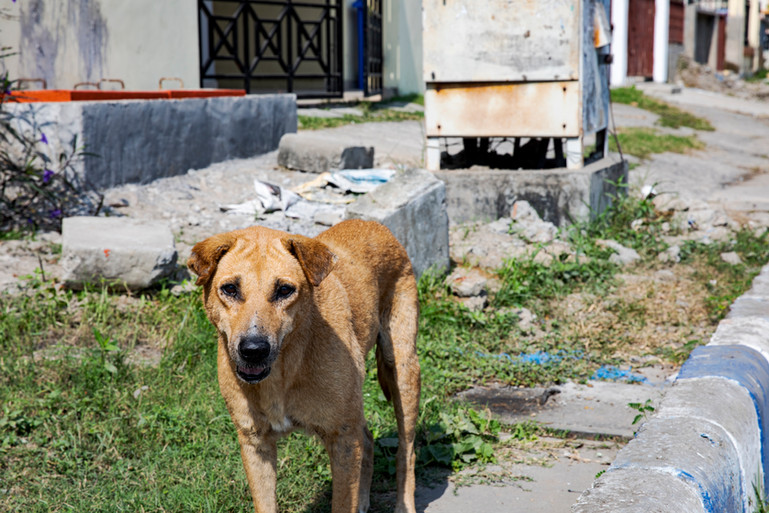 street dog 1.jpg