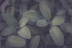 Find_Alma_Original.jpg